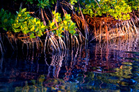 Ocean Pointe Mangrove, Florida Keys
